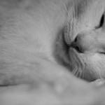 睡眠時無呼吸症候群にはCPAP!琴奨菊の優勝の秘密